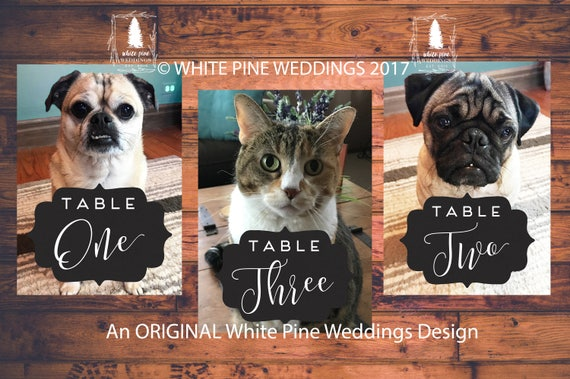 How to include our cats in the wedding day, without having them there? 1