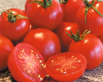 Heirloom Tomato- GLACIER- 56 to 60 day RED Determinate - 25 seeds