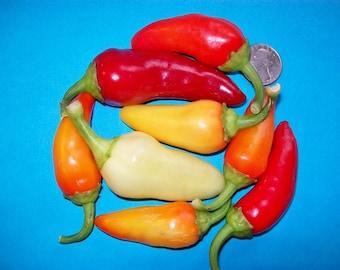 Hot Pepper- Caloro- 85 day- 1500 scovilles- mild heat- 25 seeds