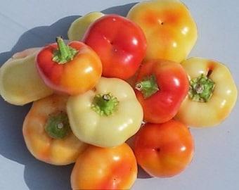 Hot Pepper- Alma Paprika- 80 day- 10,000 scovilles- medium heat- 25 seeds per pack.