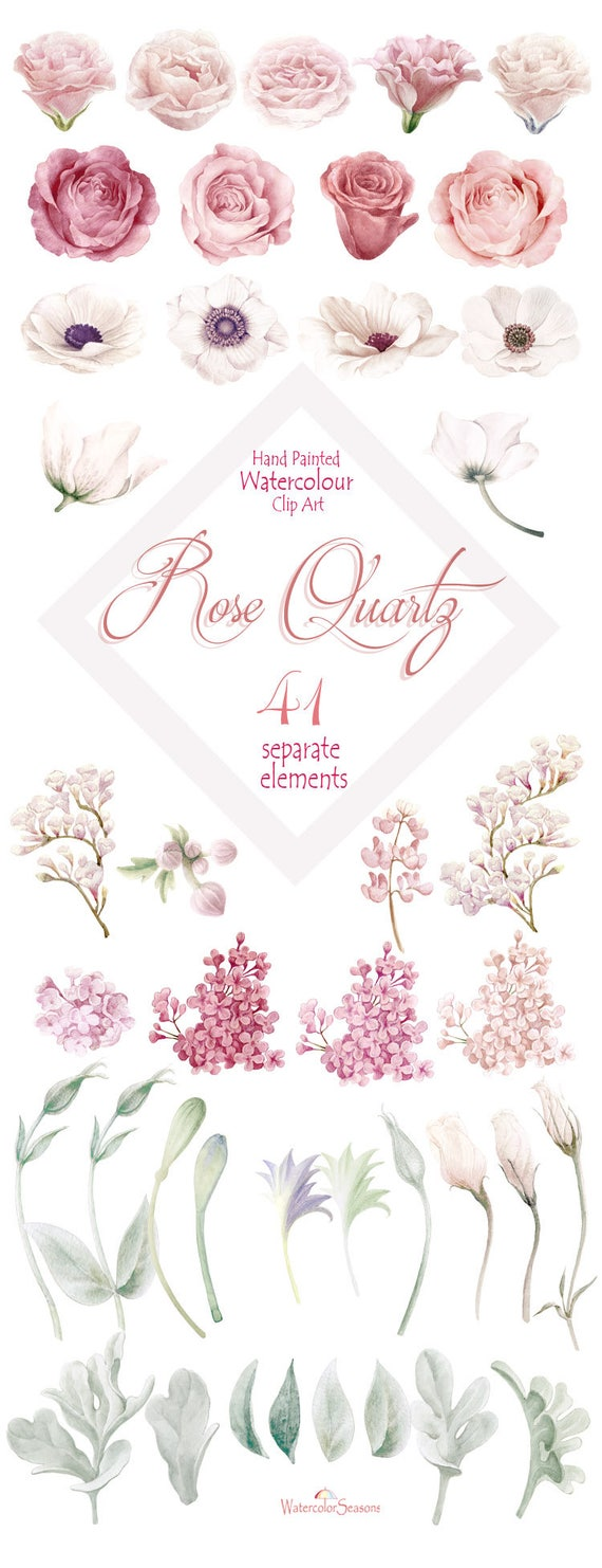 Watercolor Clipart Collection Rose Quartz Flower Elements Etsy
