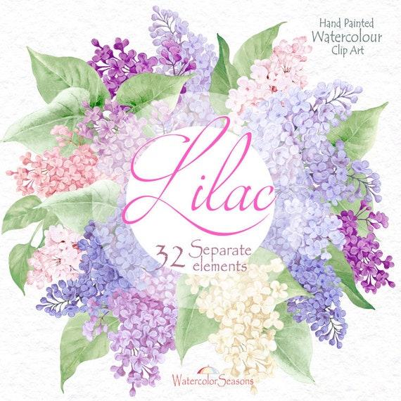 Hand Painted Akwarela Clipart Kwiaty I Zielone Liście Bzu Etsy