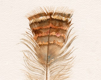 Feather Watercolor Print, Turkey Feather, Feather Print