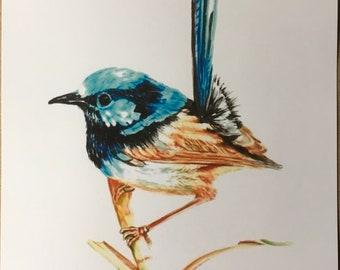 Fairy Blue Wren
