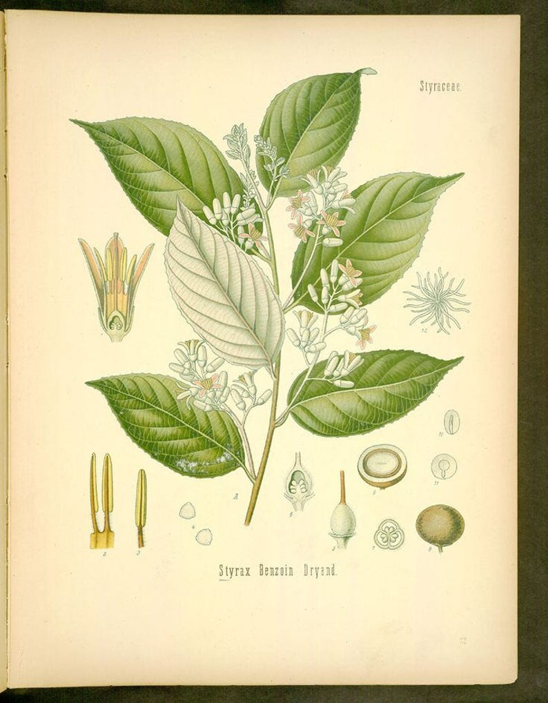 Benzoin (Sumatra) Essential Oil (Styrax benzoin) 100% Pure - 10ml