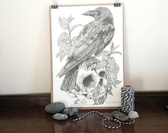 Raven and Skull    A4 original drawing