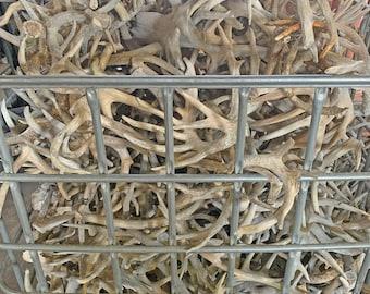 5 lbs of WhiteTail Deer Antler Sheds - Grade #3 - Bulk Craft Antlers -Weddings- Dog Chews - Home Decor -