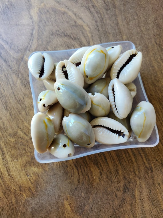 25 Ringtop Cowrie Shells - Drilled
