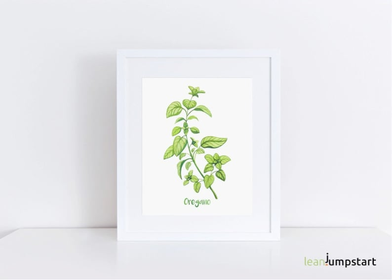 Oregano Art Botanical Print Herb Prints Watercolor Herbs image 0