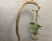 Freestanding Driftwood Plant Hook