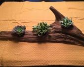 Tabletop Planter 3