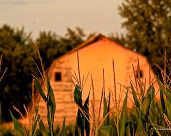 A Barn Among the Corn