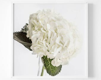 White Flower Print white hydrangea white Wall Flower Decor Spring Decor Abstract Flowers Spring Floral Decor Spring Cottage Wall Art