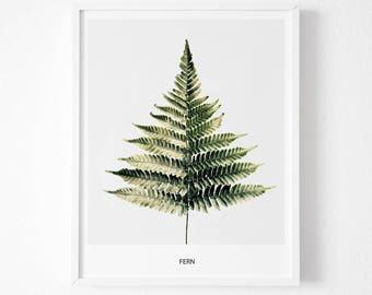 Fern Print, Fern Photography, Fern Art, Fern Decor, Fern Printable, Fern Art Print, Fern Fine Art, Botanical Print, Botanical Decor