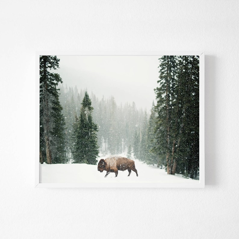 Buffalo Print, Bison Wall Art, Modern Minimal, Buffalo Print, Bison Print,  Large Wall Art Print, Animal Prints, Animal Poster Art