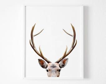 Deer Antlers, Deer Print, Nursery Decor, Gift,Home Decor, Woodland Nursery, Animal Print, Deer Poster, Deer Head, Woodland Animals