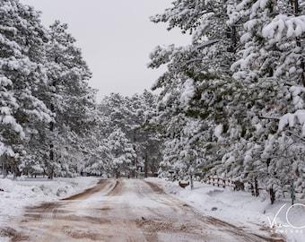 Colorado Landscape, Winter Photo, Trees, Snow, Colorado Photo, Independence Pass, Travel Photo, Mountain Photo, Canvas Print, Home Decor