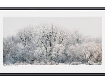 Winter Trees, Panorama Photo, Frozen Trees, Trees,  Trees in Winter Photograph, Frozen Trees Photo, Landscape Photo, Landscape, White