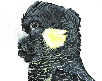"Black Cockatoo, Art Print, ""Garadi"", hand signed"