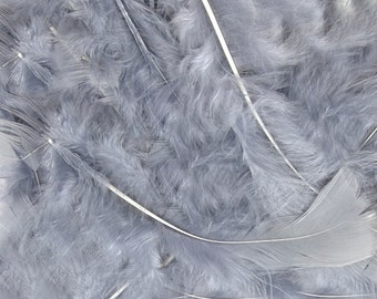 """First Grade Feathers Light Pink 8 Gram Mixed Sizes 3/""""-8/"""""""