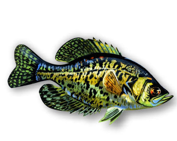 """6"""" Crappie sticker***Free Shipping***"""
