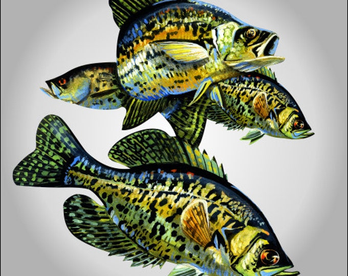 Crappie fish decal ***Free Shipping***