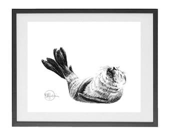Baby seal print 8 x 10