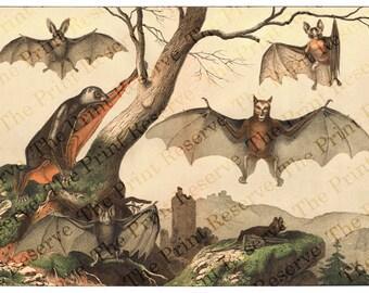 Printable Scientific Bat Print Antique Bats Clipart  Art Digital Download
