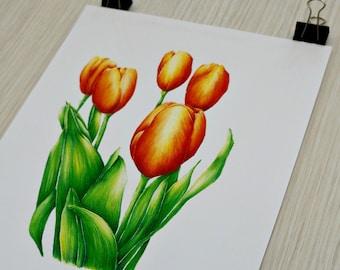 Tulip Botanical Painting Print