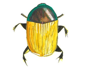 Brown and green beetle illustration A3 Original