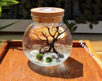 Decorating office desk Professional Office Office Board Led Marimo Kit Round Blown Glass Jar Moss Balls Crystal Graves Black Sea Fan Shells Miniature Aquarium For Office Desk Decor Youtube Office Desk Decor Etsy