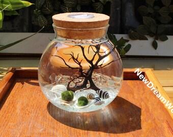 office desk decor. LED Marimo Kit - Round Blown Glass Jar Moss Balls Crystal Graves Black Sea  Fan Shells Miniature Aquarium For Office Desk Decor