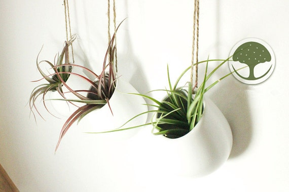 3 Or 4 In Package White Ceramic Wall Vasehanging Air Plant Etsy