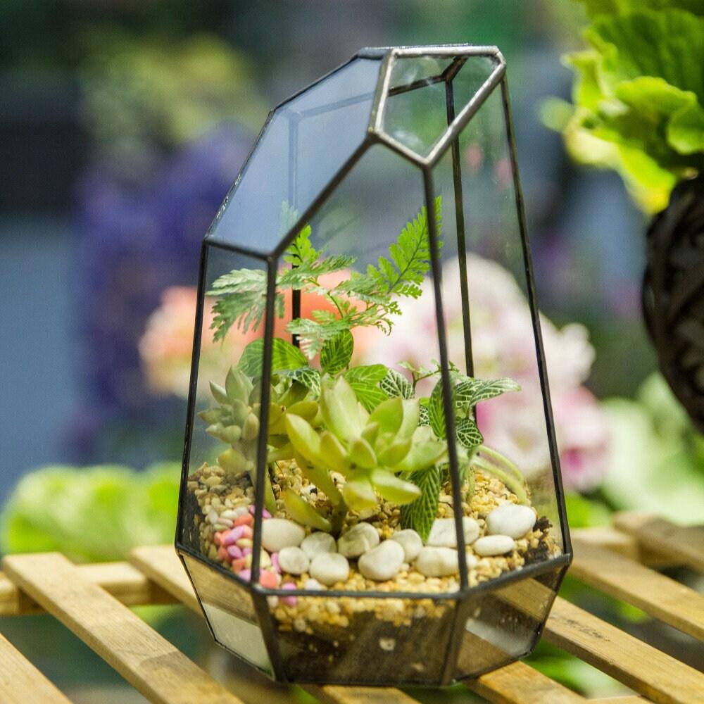 Unregelmäßige saftig geometrische Glas Box Terrarium schwarz
