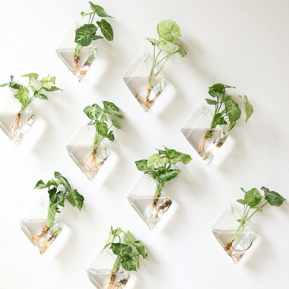 Set Of 9 Rhombus Glass Wall Vase Indoor Plants Wall Planters Etsy