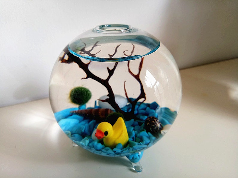 Marimo Terrarium Kit Mini Footed Aquariumliving Japanese Etsy