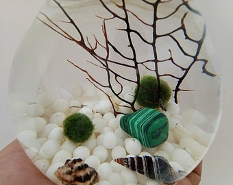 Marimo Terrarium Kit -Bulb Round Terrarium with 2 Japanese Moss Balls,white Tridacna Pebble,Sea Fan and Seashells,Christmas Gifts