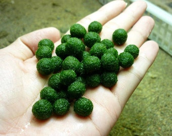 1 Japanese Marimo Moss Ball,Living Aquatic Growing Plant for Aquarium Terrarium or Fish Bowl Decorations