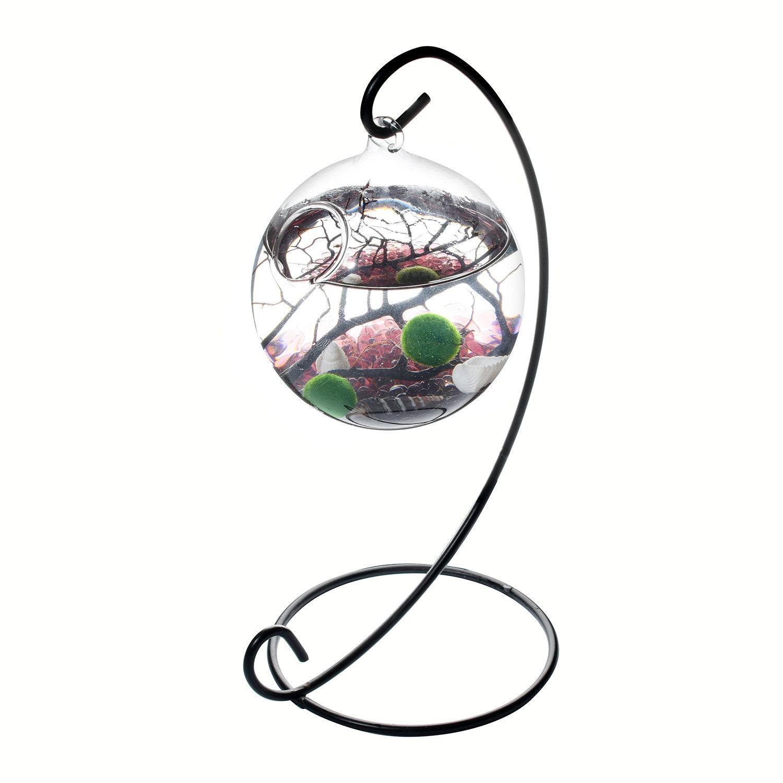 Sale Marimo Terrarium Mini Aquarium Purple Glass Pebbles Fan Etsy