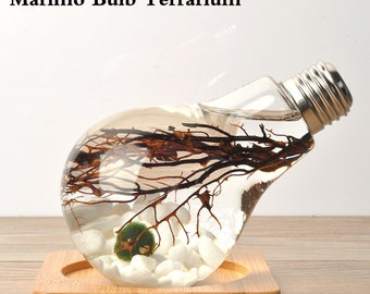Tabletop Marimo Vase/Marimo Bulb Terrarium Underwater aquarium with moss ball white stone sea fan office desk decoration