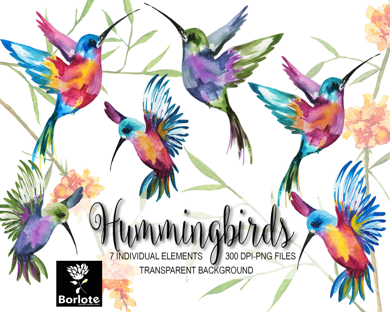 Colibríes, pájaros coloridos, pintados a acuarela colibríes, azul ...