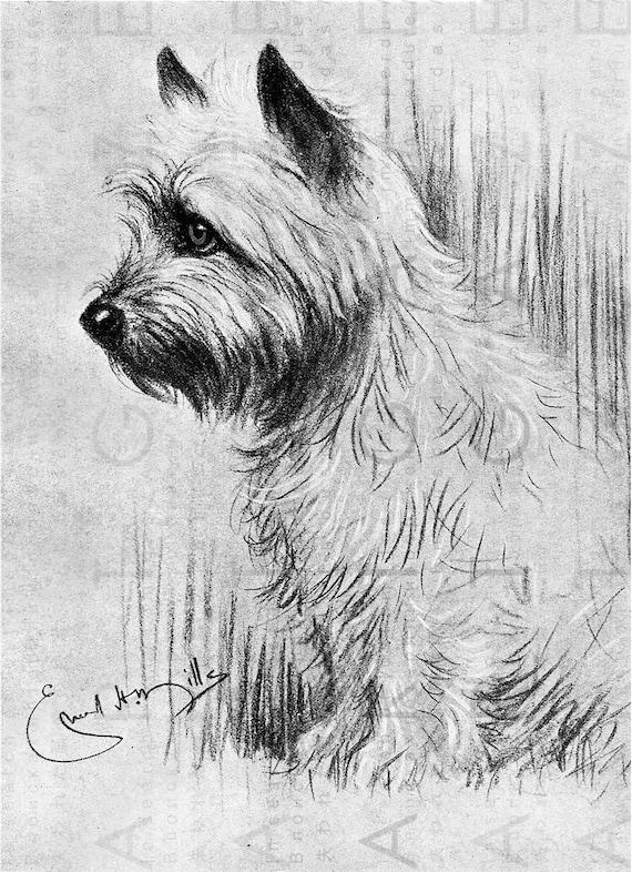 Lovely Cairn Terrier Dog Portrait Dog Printable Wall Art Dog Etsy