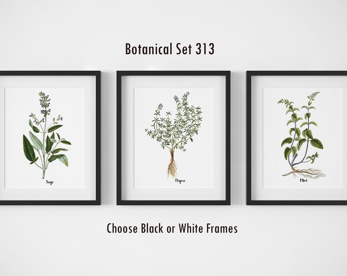 Featured listing image: Botanical Prints, Set of 3, Framed Wall Art, Farmhouse Wall Decor, Botanical Art, Rustic Decor, Kitchen Decor, Herb Prints, Wall Art