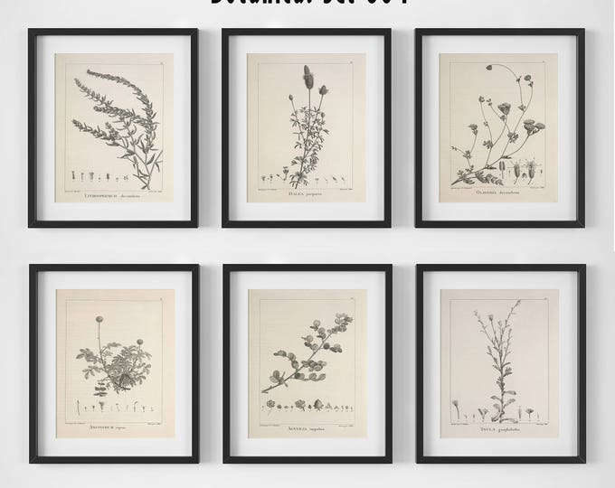 Featured listing image: Botanical Print Set of 6, Botanical Wall Art, Floral Print Set, Vintage Botanical Prints, Antique Floral Art, Botanical Illustrations