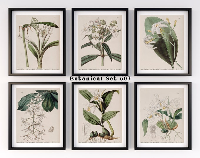 Featured listing image: White Flower Print Set, Botanical Print Set of 6, Botanical Wall Art, Vintage Botanical Prints, Antique Floral Art, Botanical Illustrations