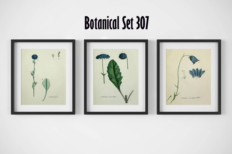 Botanical Print Set, Framed Art, Floral Prints, Modern Farmhouse ...