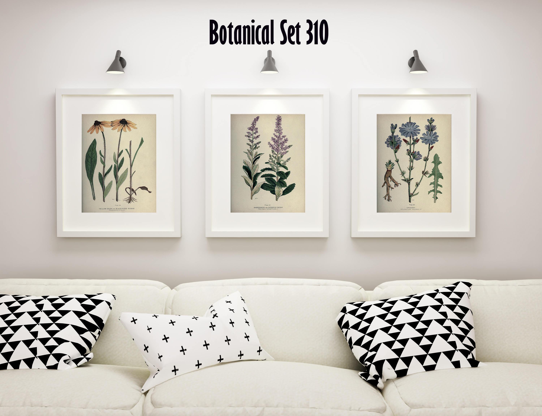 Botanical Print Set of 3, Wildflower Wall Art, Antique Botanical ...
