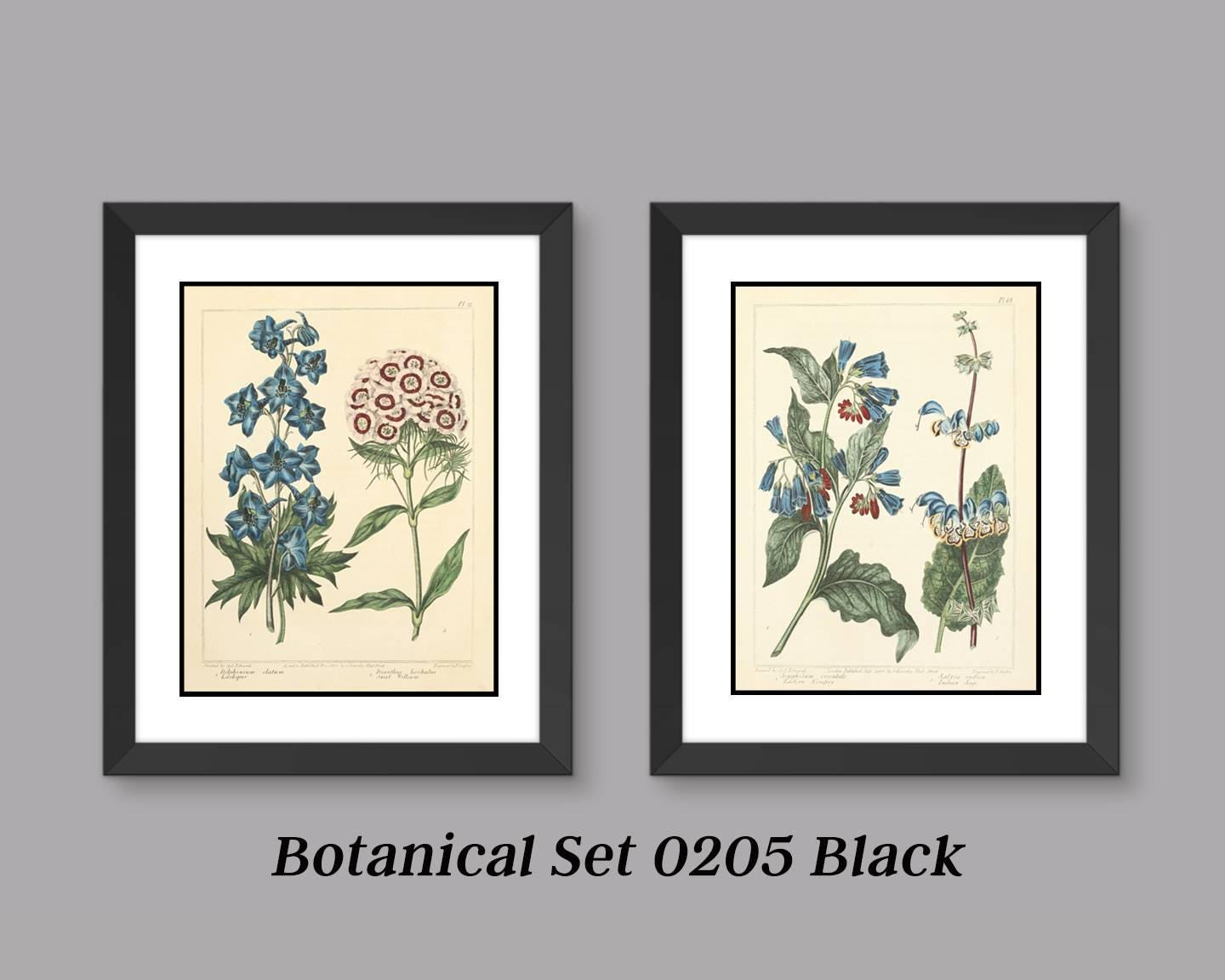 Botanical Print Set -Antique Botanical Prints - 2 Print Set - Matted ...