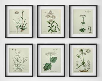 White Flower Print Set, Botanical Print Set of 6, Botanical Wall Art, Vintage Botanical Prints, Antique Floral Art, Botanical Illustrations