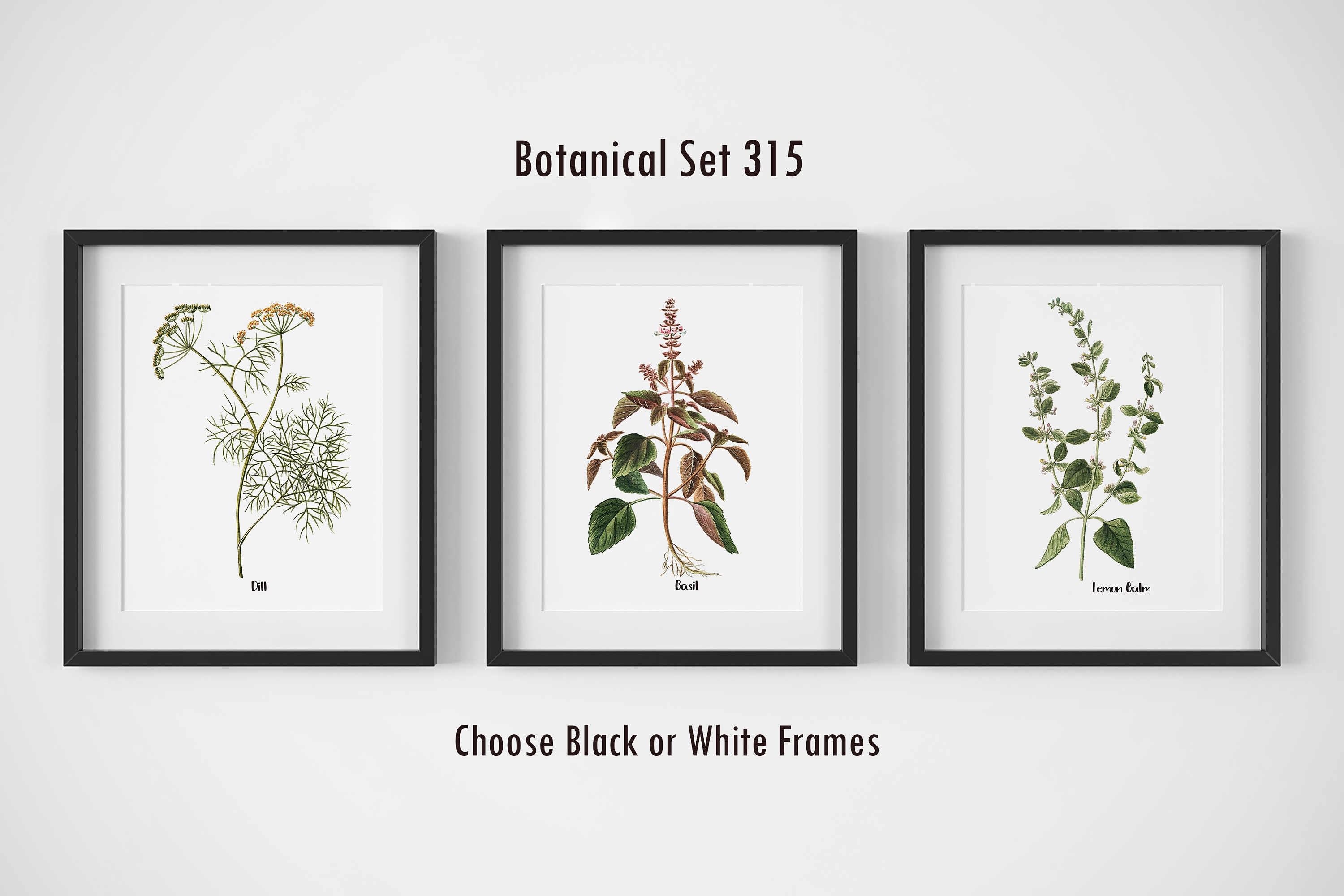 Botanical Prints Set Of 3 Framed Wall Art Farmhouse Wall Decor